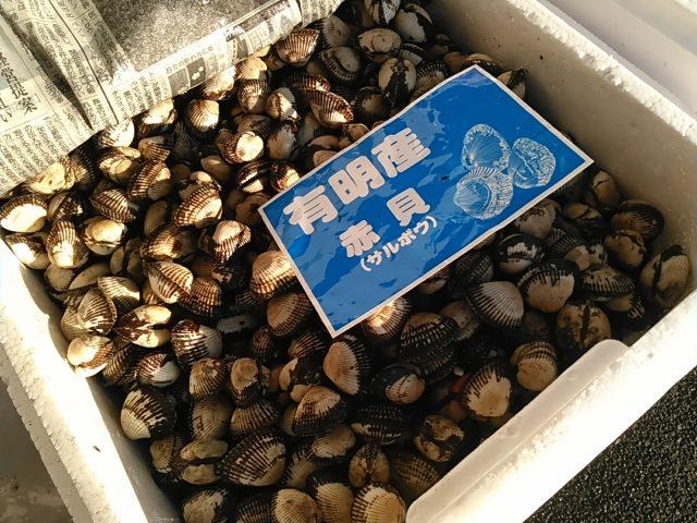 赤貝(サルボウ貝)