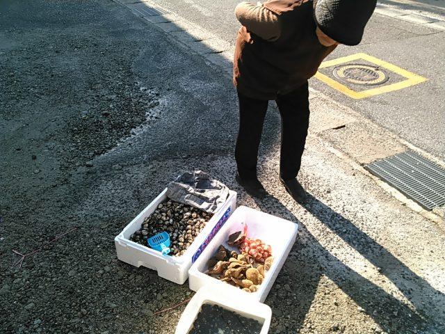 赤貝(サルボウ貝)を吟味