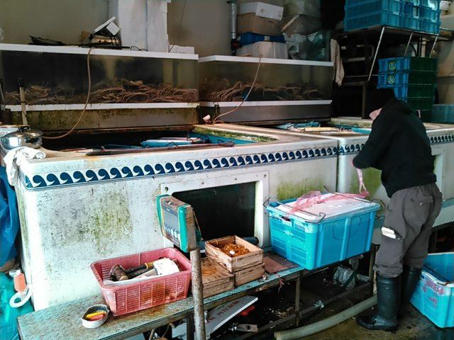 鳥取県漁連のカニプール