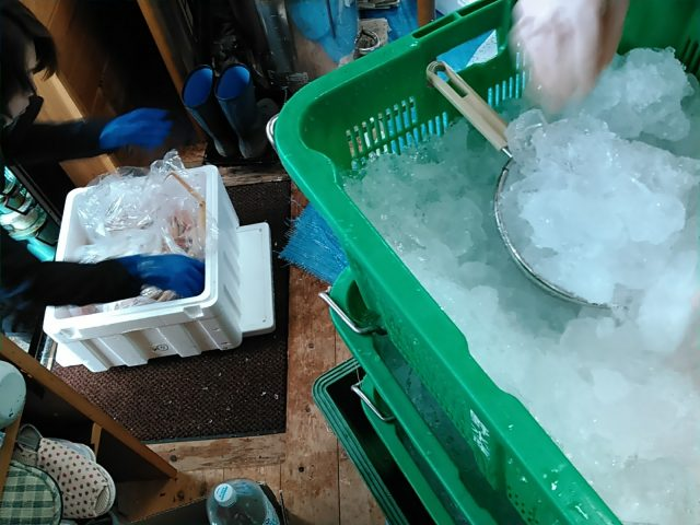 松葉ガニの氷詰め作業