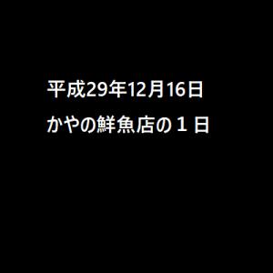 平成29年12月16日 かやの鮮魚店の1日