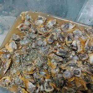 サルボウ貝のピクルス