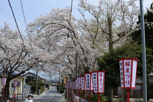 外江公民館 桜