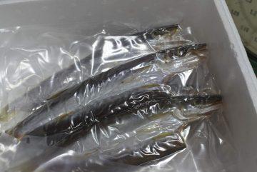 かやの鮮魚店 自家製 カマス干物