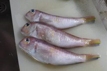 甘鯛(アマダイ)